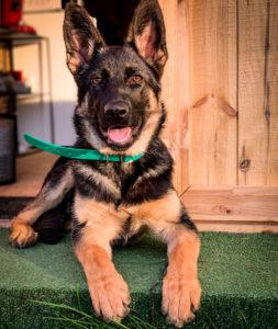 blue-dog-educateur-canin-region-centre_6671